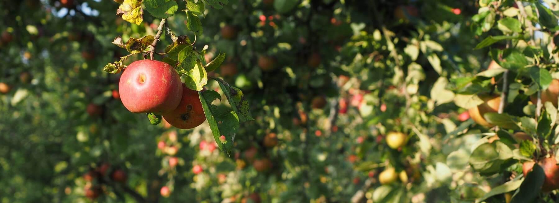 Fruchtsaftkelterei Mehlhorn OHG   Bezugsquellen